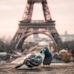 ФРАНЦИЯ- Париж - градът на светлината✈