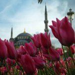 Фестивал на лалето в Истанбул !