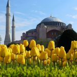 Истанбул- Фестивалът на лалетата!