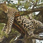 ТАНЗАНИЯ- Екзотично Сафари в Танзания и почивка на о-в Занзибар