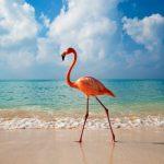 ДОМИНИКАНСКА РЕПУБЛИКА- Коледа и Нова година!☀️Почивки на тропическия Рай, 2021✈